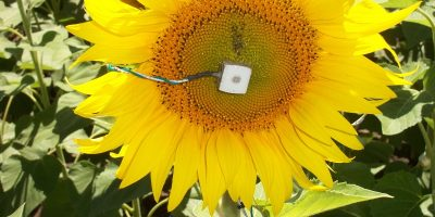 Micrometeorología: el clima bajo la lupa 8