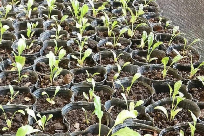 Cómo armar plantines de flores y hortalizas en casa 1