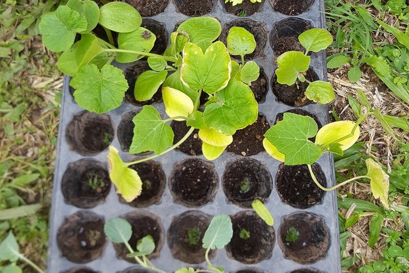Cómo armar plantines de flores y hortalizas en casa 2