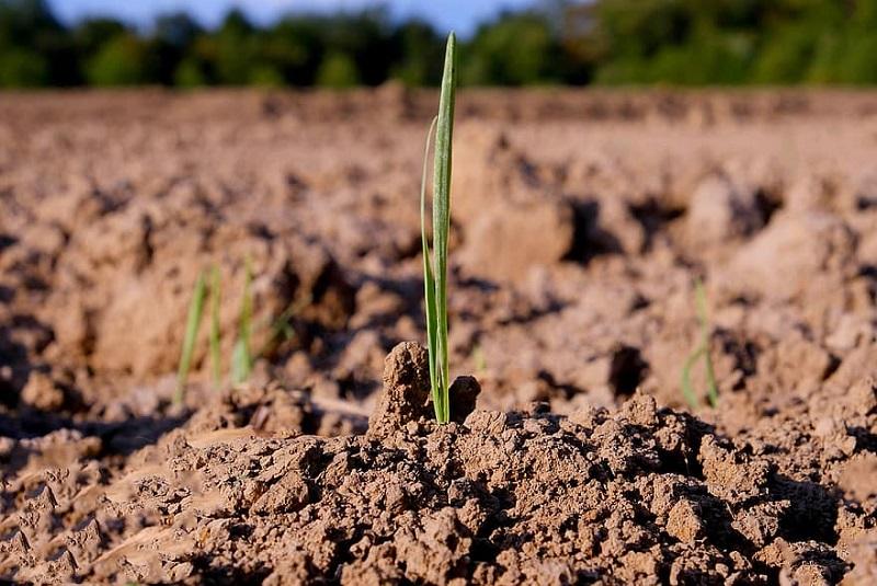 En la Argentina, sólo se repone el 30 % de los nutrientes que se extraen 3