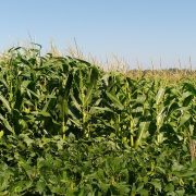 En la Argentina, sólo se repone el 30 % de los nutrientes que se extraen 1