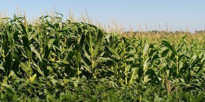 En la Argentina, sólo se repone el 30 % de los nutrientes que se extraen 7