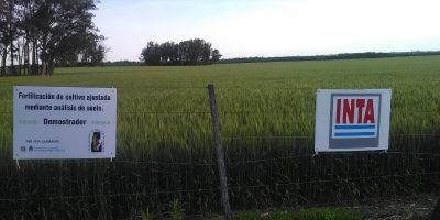 El zinc y los microorganismos mejoran el rendimiento del trigo 10