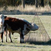 El INTA impulsa un manejo ganadero sustentable 2