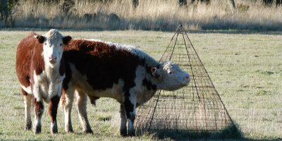 El INTA impulsa un manejo ganadero sustentable 5