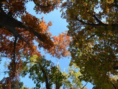 Comienza la época ideal para planificar una forestación 11