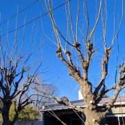 El INTA brindó 5 consejos sobre la poda de los árboles 2