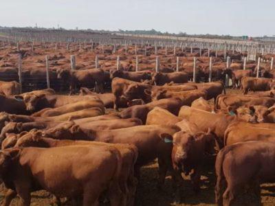 La carne argentina genera emisiones por debajo de valores internacionales 4