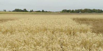 Carbono: el elemento que determina la sustentabilidad del agro 7